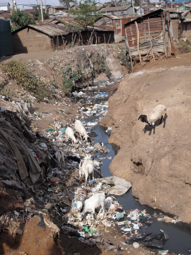 The river, the one source of drinking water in Kibera.